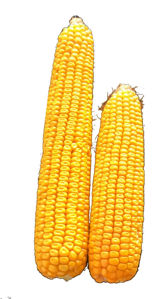 mais met en zonder driptape